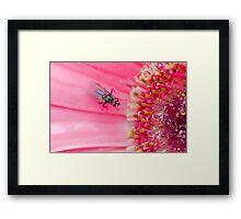 Fly to the Flower Framed Print