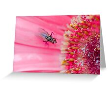 Fly to the Flower Greeting Card