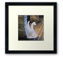 A  swan lost in town Framed Print