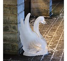 A  swan lost in town Photographic Print