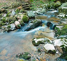 Woodland water at Glencree No2 by Martina Fagan