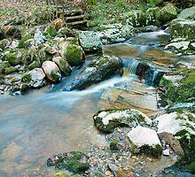 Woodland water at Glencree No2 by Martina Fagan