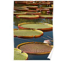 Giant LillyPads Poster