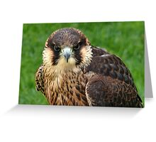 Falcon Eyes Greeting Card
