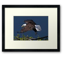 Graceful Manoeuvres Framed Print