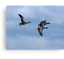 Brent Geese Overhead Canvas Print