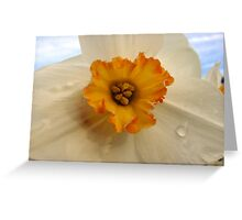 Orange centre daff Greeting Card