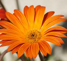 Orange you enjoying your day? La Mirada, CA USA Wat Garden by leih2008