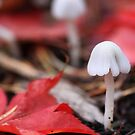 Tiny Mushrooms by Anne McKinnell