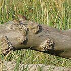 Little Birds on a Log by AleFest