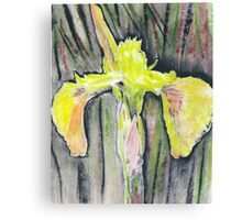Yellow Iris on Onion Paper Canvas Print
