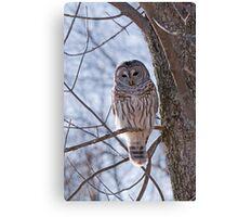 Backlit Barred Owl  Canvas Print