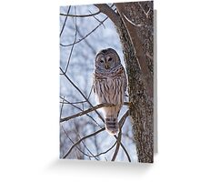 Backlit Barred Owl  Greeting Card
