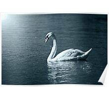 By the light of the Swan Poster