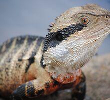 water dragon by meegs1