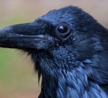 Portrait of a Raven Sticker