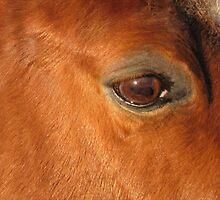 Starry Eyed by Ginny York