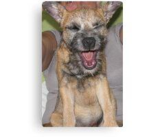 Dog Yawning Canvas Print
