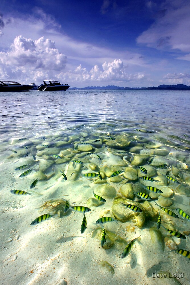 Tropical Fish by Dave Lloyd