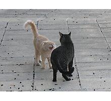 Cat Argument Photographic Print