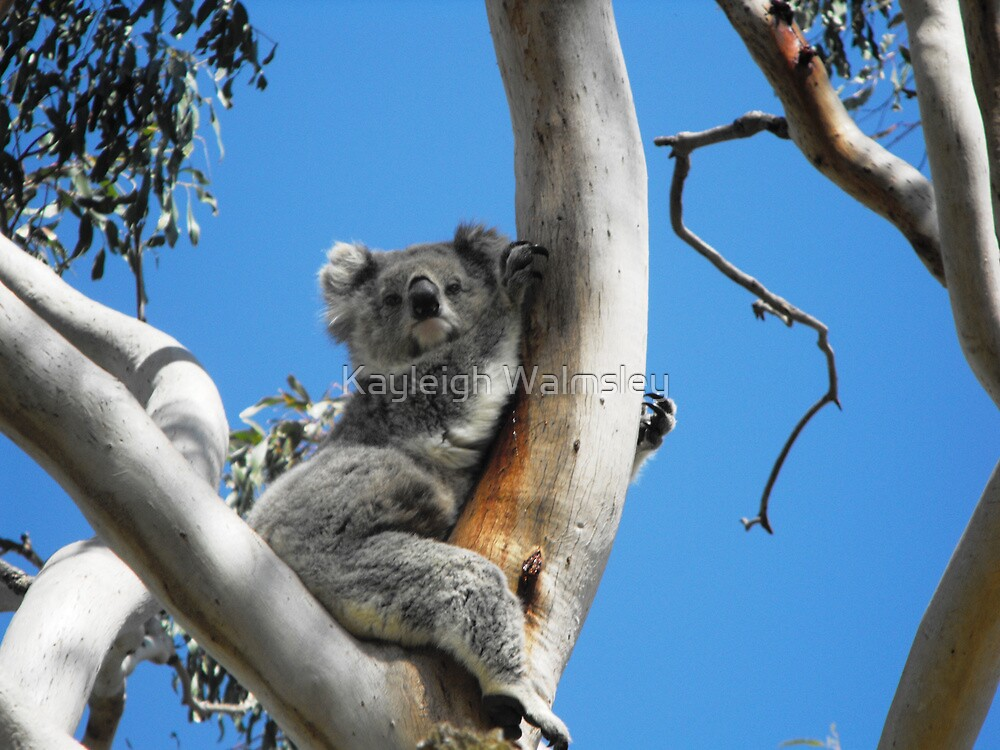 Having a lazy day by Kayleigh Walmsley