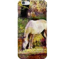 Spotted Horse in Spring iPhone Case/Skin