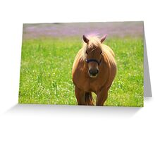 Palomino Dreams Greeting Card