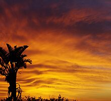 In the Palm of my sky by Brian Edworthy