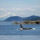 Orca and Mt Baker   by RichImage