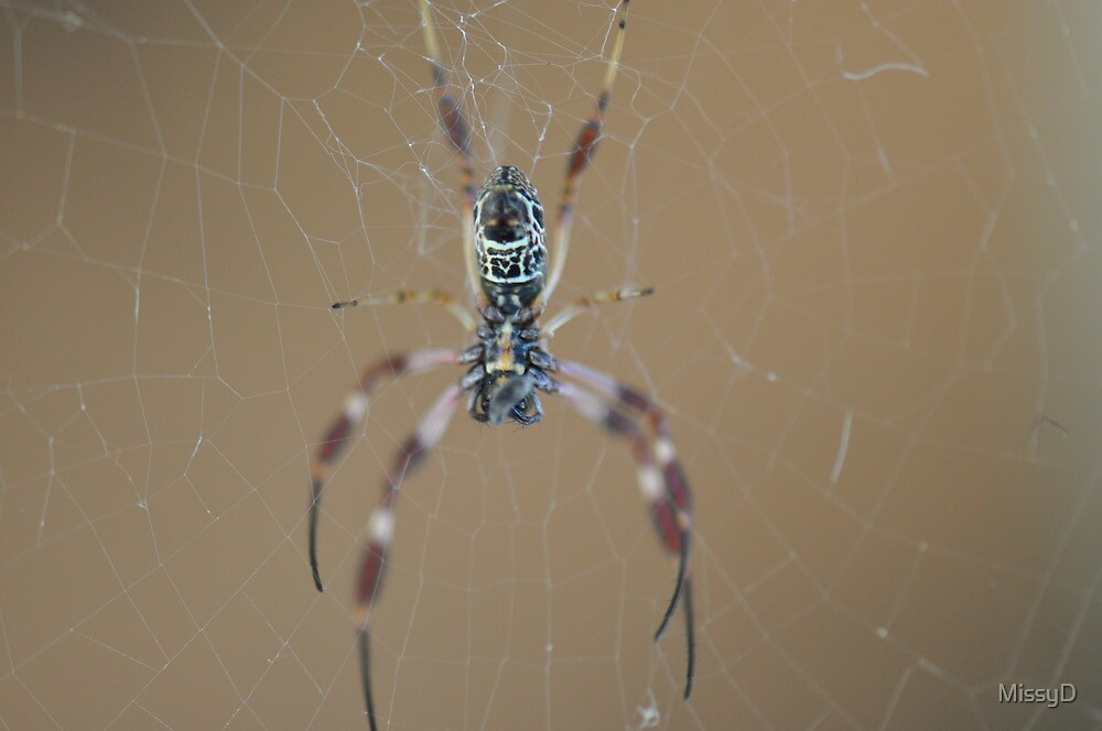 Creepy Spider by MissyD