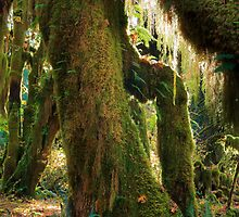 Mossy Trunk by Inge Johnsson