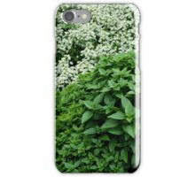 Sweet Basil iPhone Case/Skin