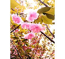 Pink is Life Photographic Print