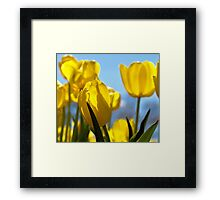 Sunshine Tulips Framed Print