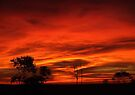 """'Dawn Explosion"""" by debsphotos"""