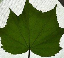 green leaf, Albury NSW by mowieb