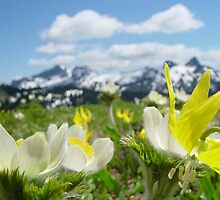 Flowers on Mt. Rainier by MivillePhoto