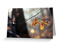 Predators: leaves and the sun. Greeting Card