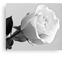 Single Rose in Black and White Canvas Print
