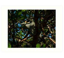 Bird in the Bush Art Print
