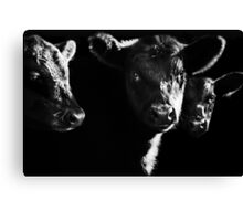 Cow With Calves #2 Canvas Print