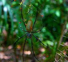 Spider and her Babies by purpleneil59