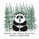 Panda by Shelagh Linton