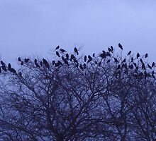 Home to Roost by Gerry  Temple