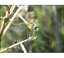 Forest Eyes - dragonfly print Photographic Print