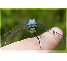 Sky Eyes - dragonfly print Photographic Print