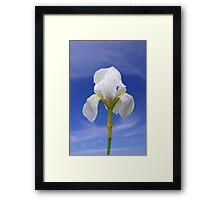 White Iris Framed Print