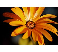 A flower (Is it wooden sunflower or not) Photographic Print