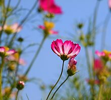 Flowers Against Blue Sky by snehit