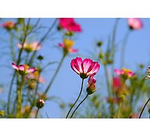 Flowers Against Blue Sky Photographic Print